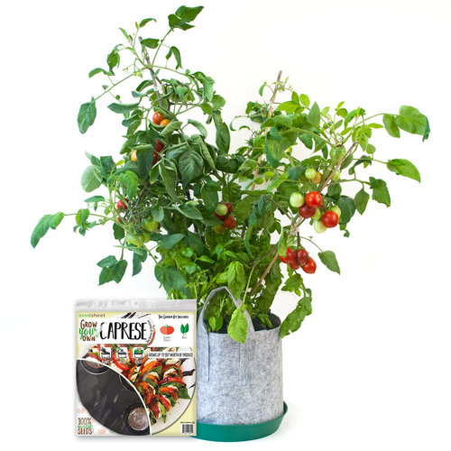Grow Your Own Caprese Salad