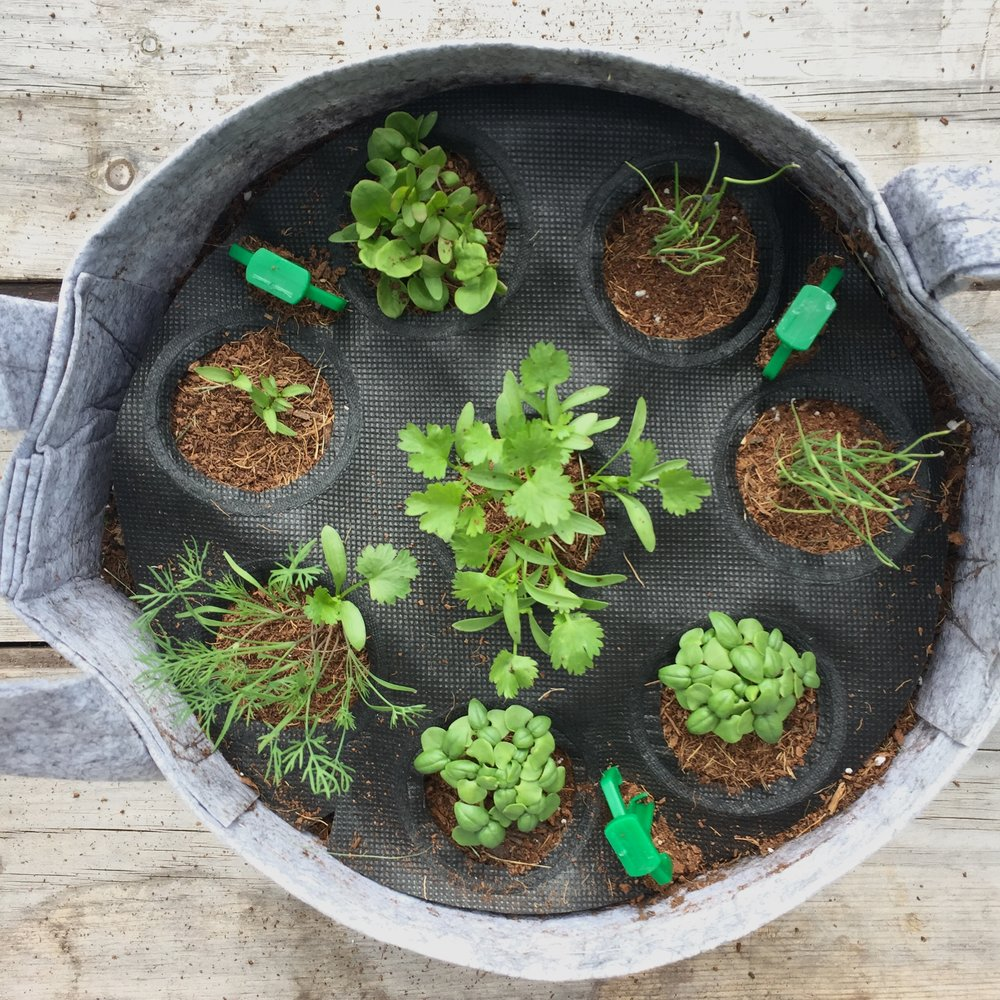 How To Thin Your Herb Garden