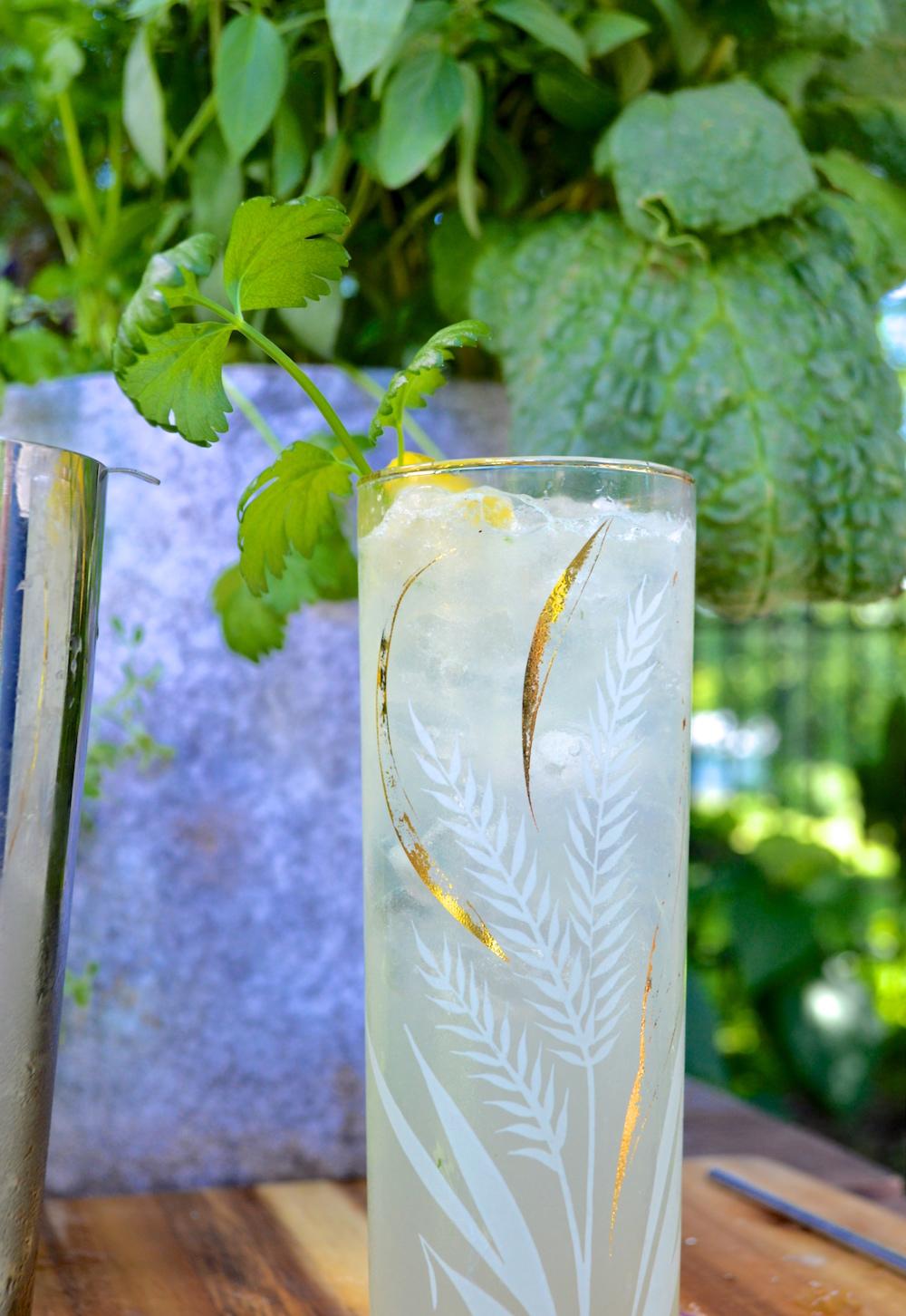 Celery Daisy Cocktail Recipe