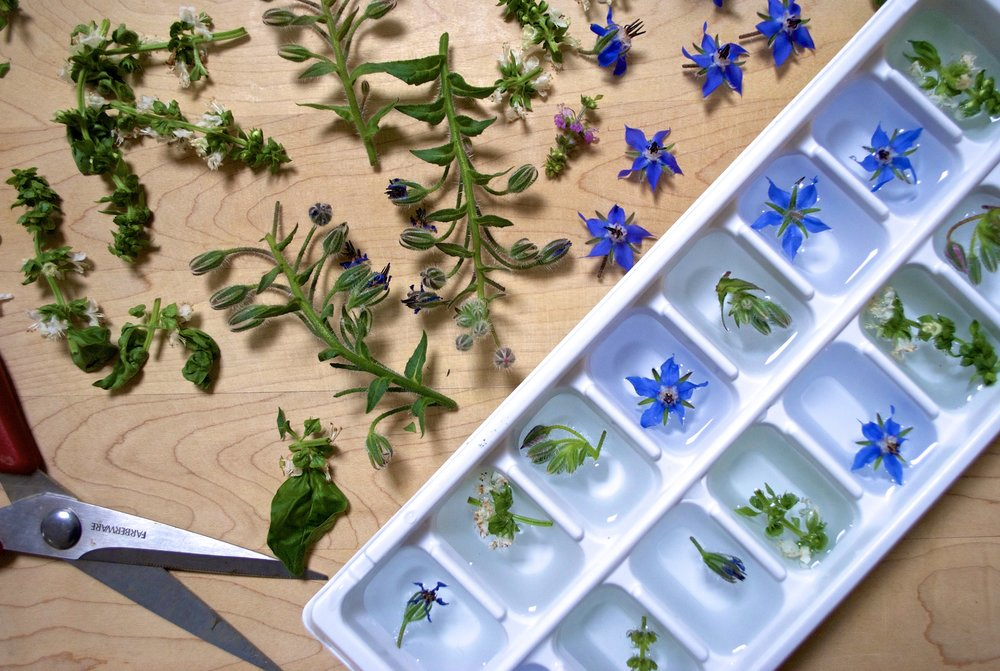 Edible Flowers - Floral Ice Cubes