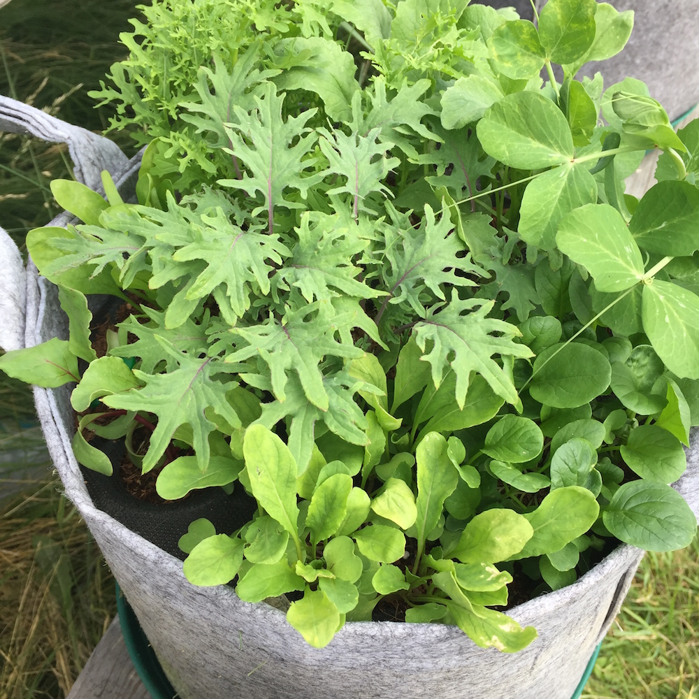 USE ORGANIC FERTILIZER TO STOP YELLOWING LEAVES