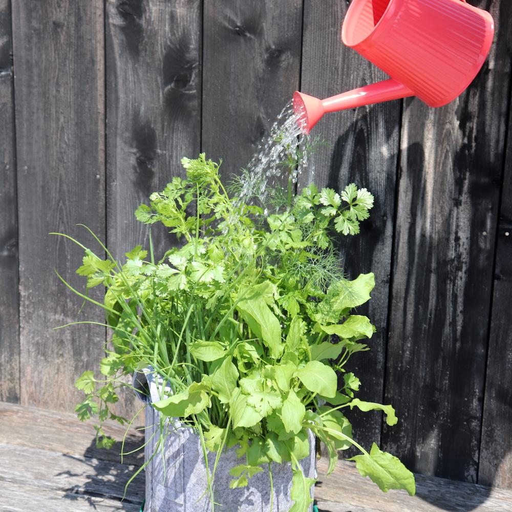 Watering Herb.JPG