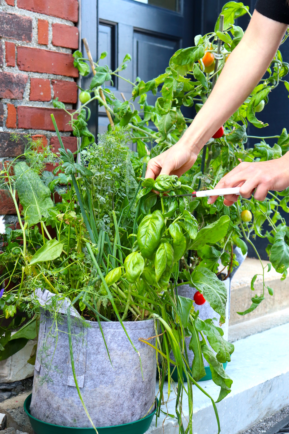 how to plant a fall garden in a hot southern climate