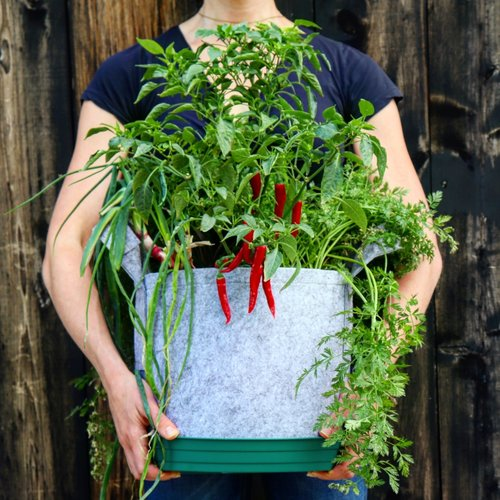 how to start a garden in a hot southern climate