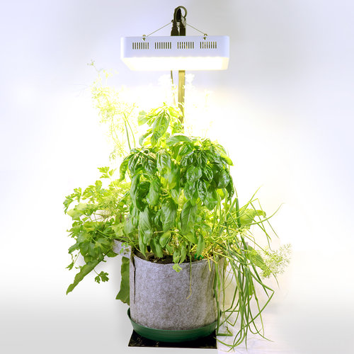 Indoor Garden Kit — Seedsheet
