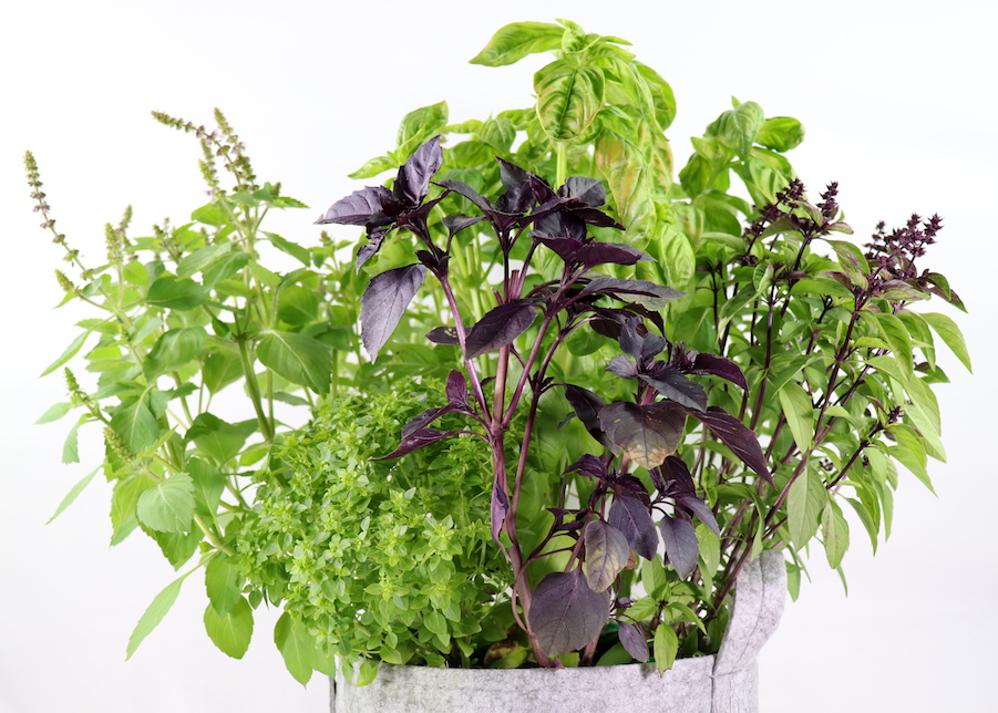 5 easy tips to design a small indoor container garden