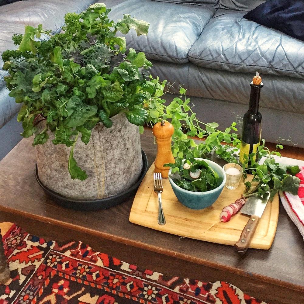 Salads Seedsheet