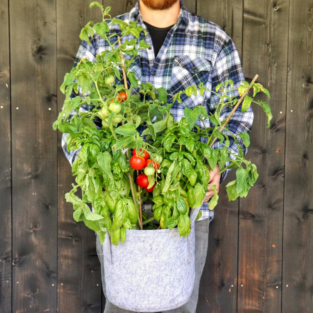 how to grow your own caprese salad garden