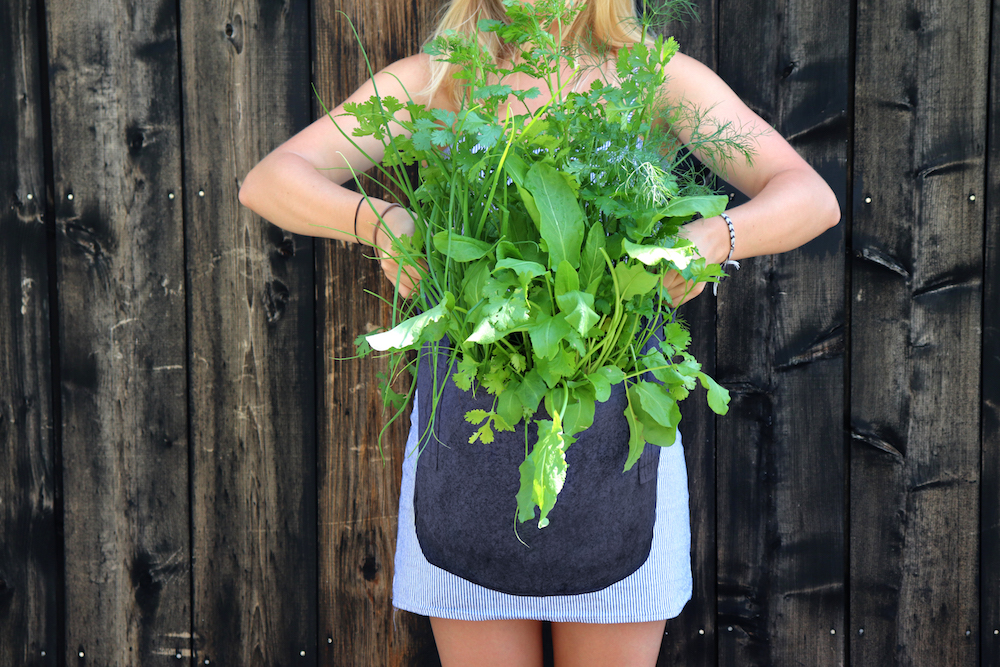 Harvesting basil from the Grow Your Own Herbs Kit