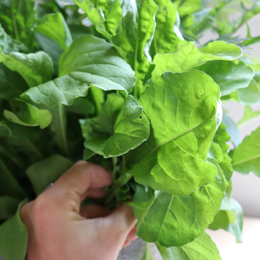 organic and safe ways to get rid of insects in an indoor garden