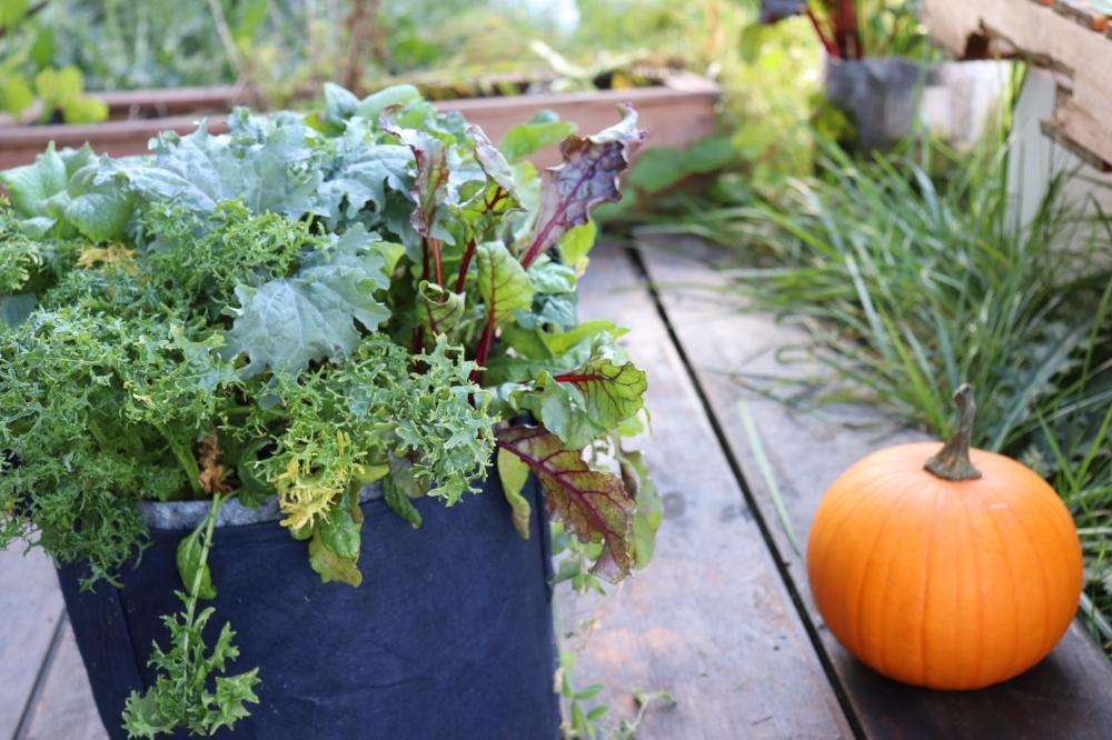 how to make a garden fresh vegducken