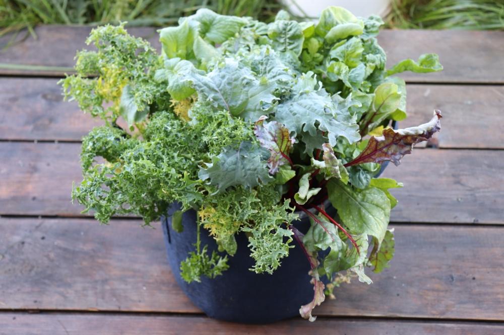 seedsheet garden gift guide 2017