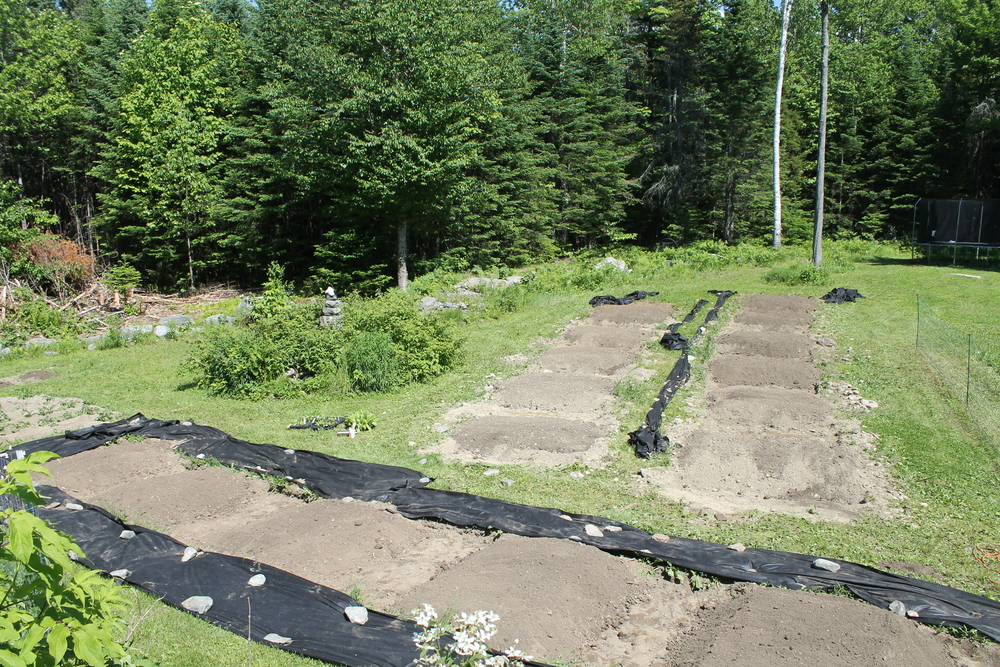 Our herb farm in the beginning. It''s so exciting! We have been building our soil for years, and we are finally ready to plant!