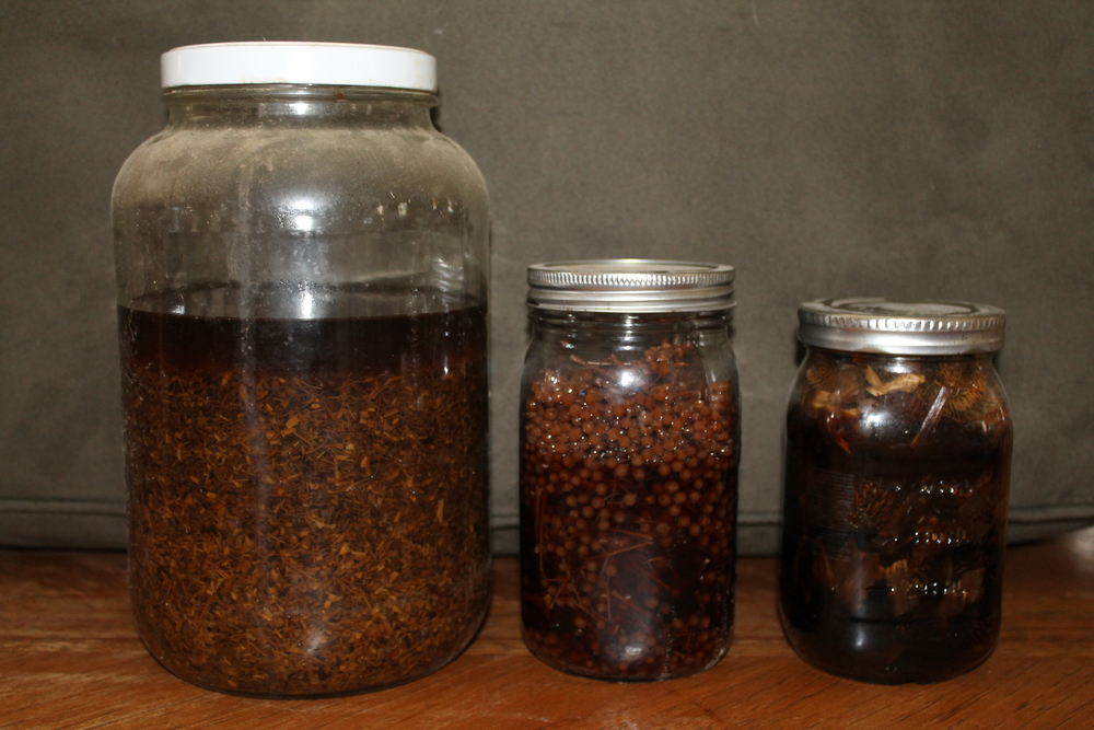 From left to right: Echinacea root, Elderberry, Echinacea Flower tincture's steeping.