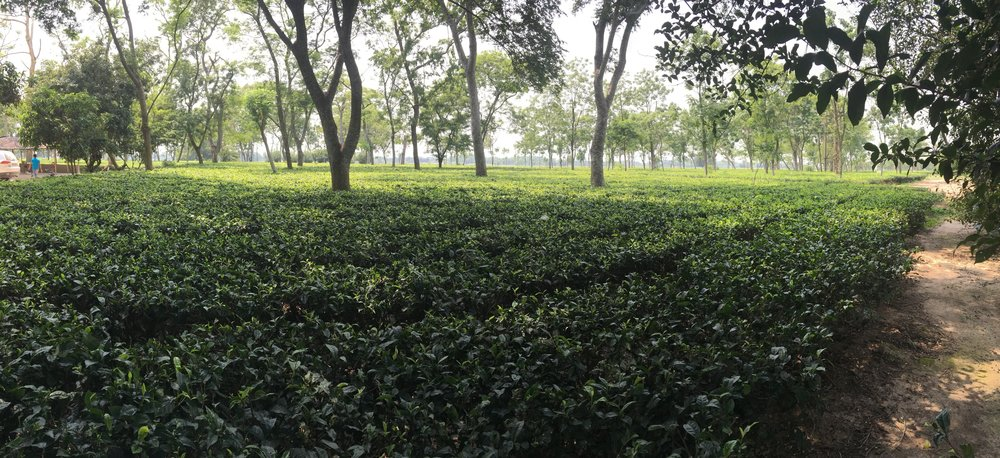 Doke Tea Estate - Bihar