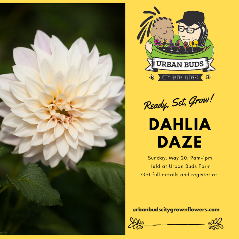 Dahlia Daze (1).png
