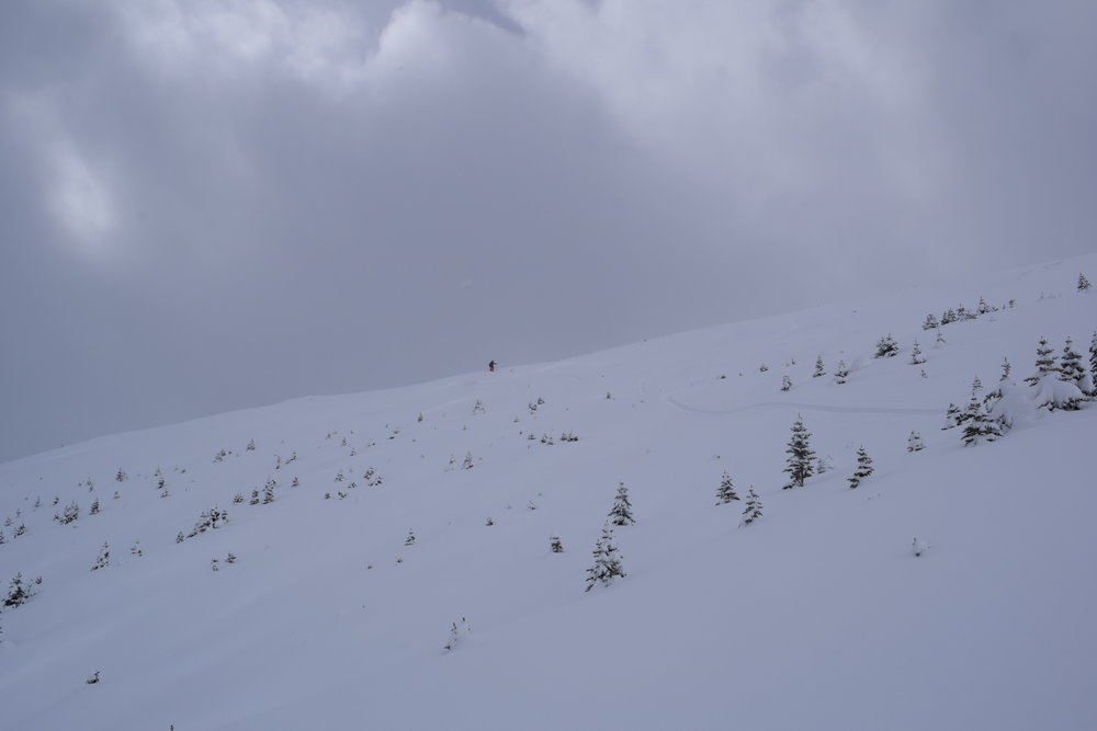 Some great skiing was found within the small trees in the Mt. Nigel Basin