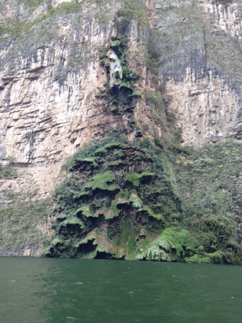 This cool vegetation growing on the rocks under a waterfall was called the Arbol de Navidad - the Christmas Tree.