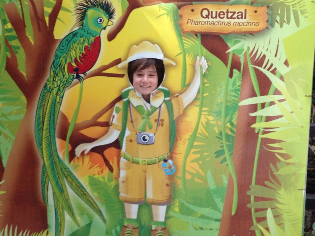 We were lucky to spot a quetzal - the native bird of Guatemala - at the zoo. Here, J poses in his Indiana J outfit.