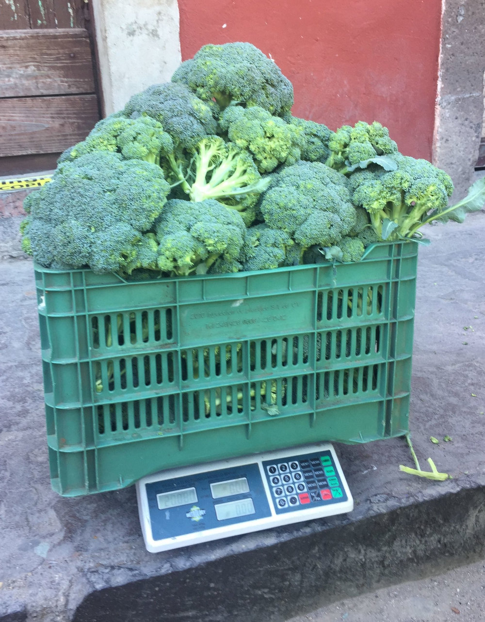 This is what 2 kilos of broccoli looks like.