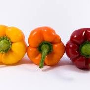 vegetable cooking class.jpg