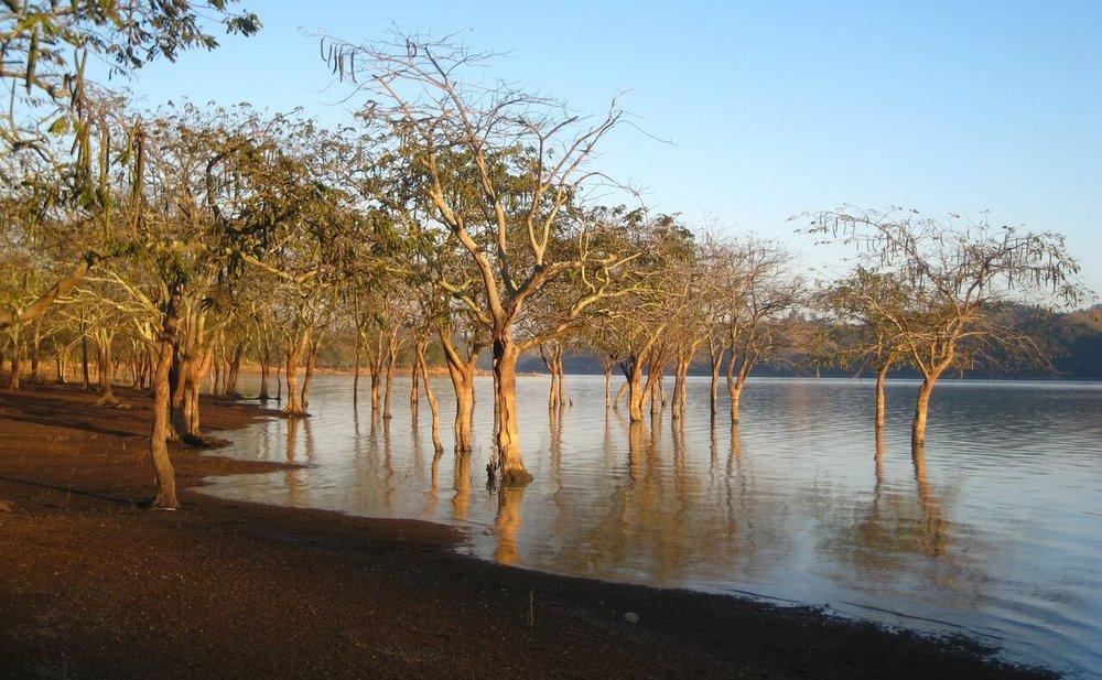cool trees in water (2).jpg