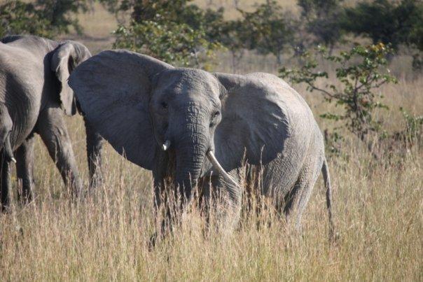 elephant awesome.jpg