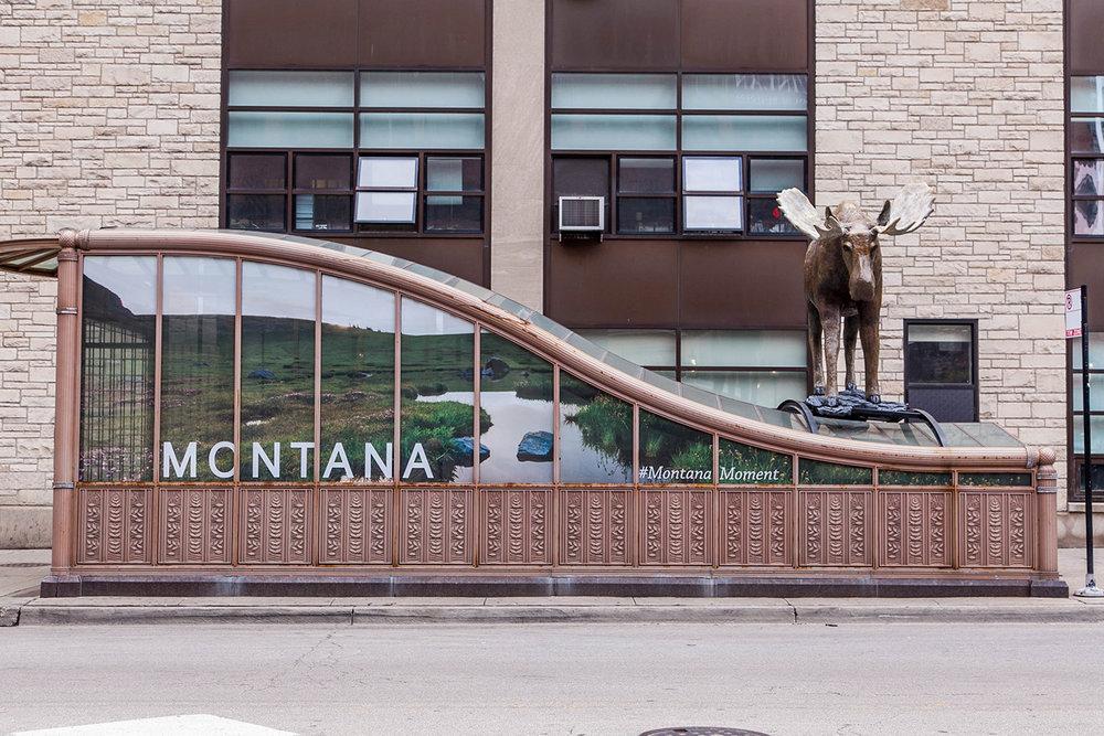 Montana Moment Moose | Chicago