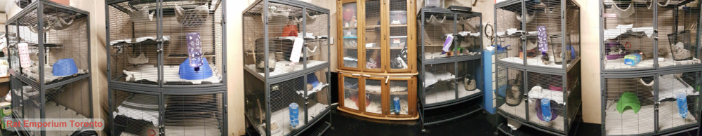 Rat Room - rat cages - rat cage set up - rat breeding - Rat Emporium Toronto