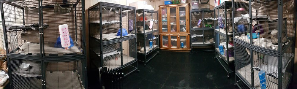 Rat Emporium Toronto - rat cages - rat breeder Toronto - rat room - pet rats