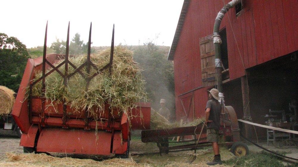 Chopping hay 2.JPG