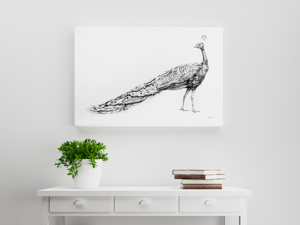 BWPeacock30x40_CanvasMockup.png