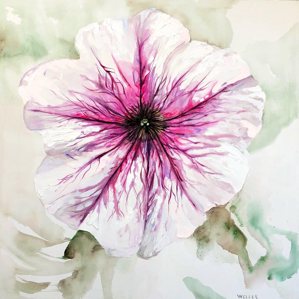 "Petunia Portrait   36x36""  Acrylic on Canvas  Available"