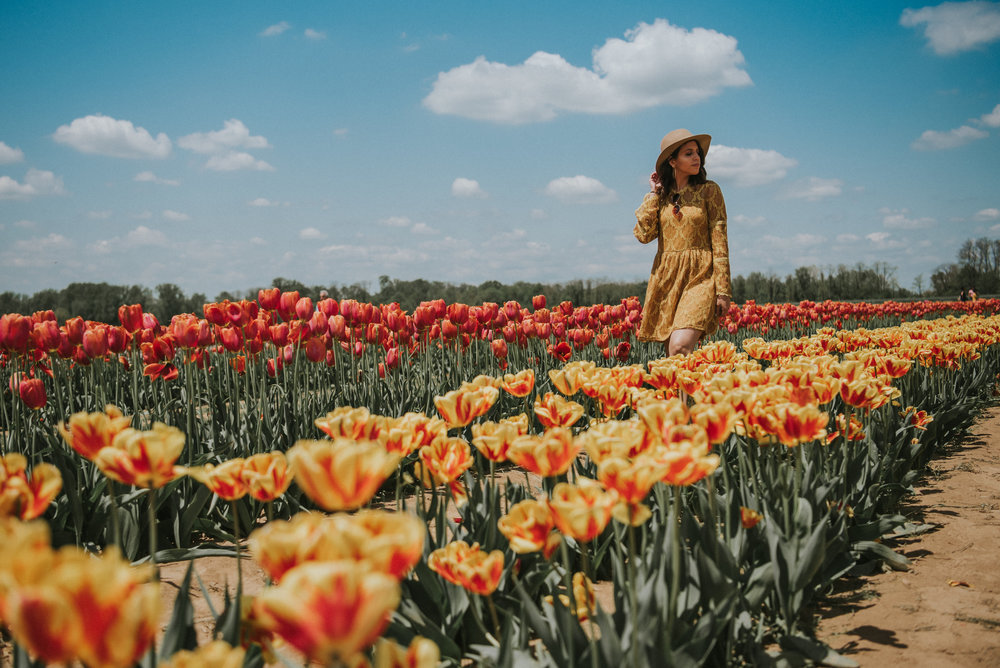 Tulips-55.jpg