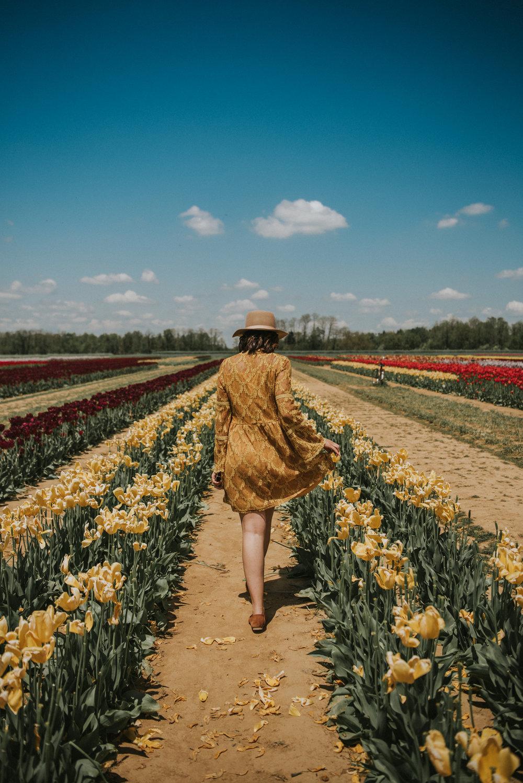 Tulips-26.jpg