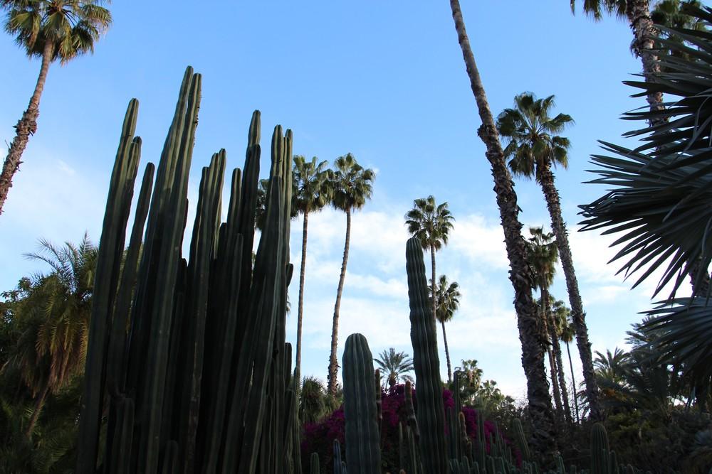 big cacti jardin majorelle