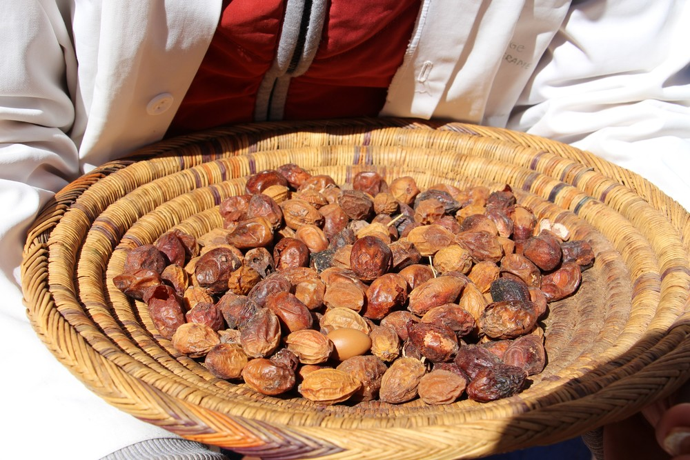 Argan kernels from which the oil is made. The Argan tree is endemic to Morocco and provides income for many of the women living in Ourika valley and the high Atlas Mountains.