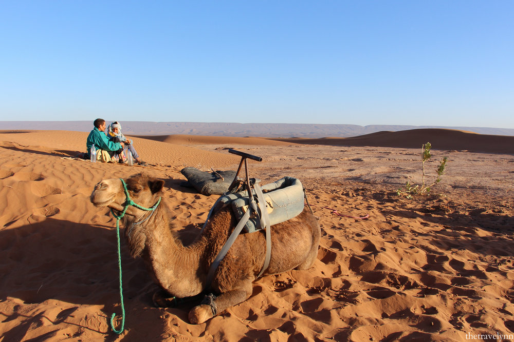 Camel sitting