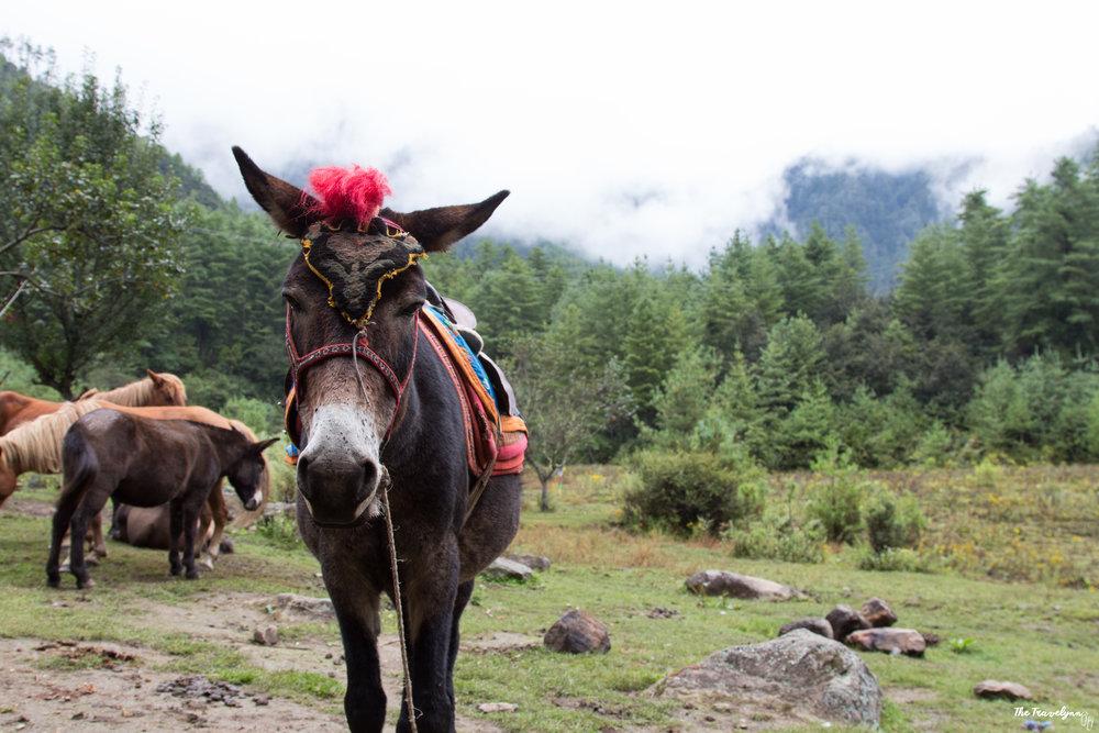 Bhutan-67.jpg