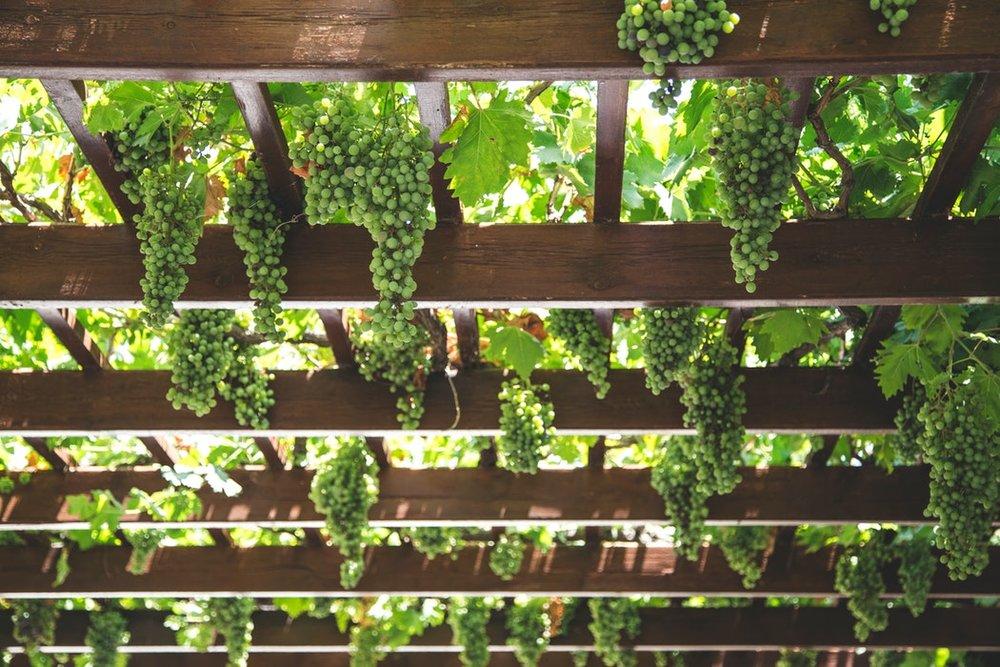 grapes crete.jpg