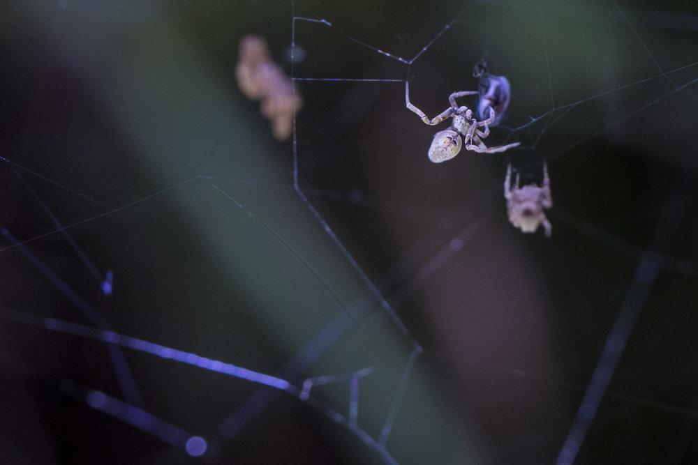 Mystery_Spider_2.jpg