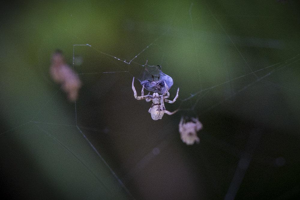 Mystery_Spider_1.jpg