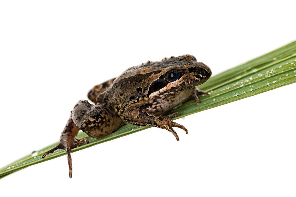 Frog_1.jpg