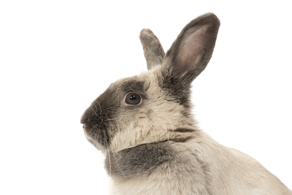 Lucy_Lop_3.jpg