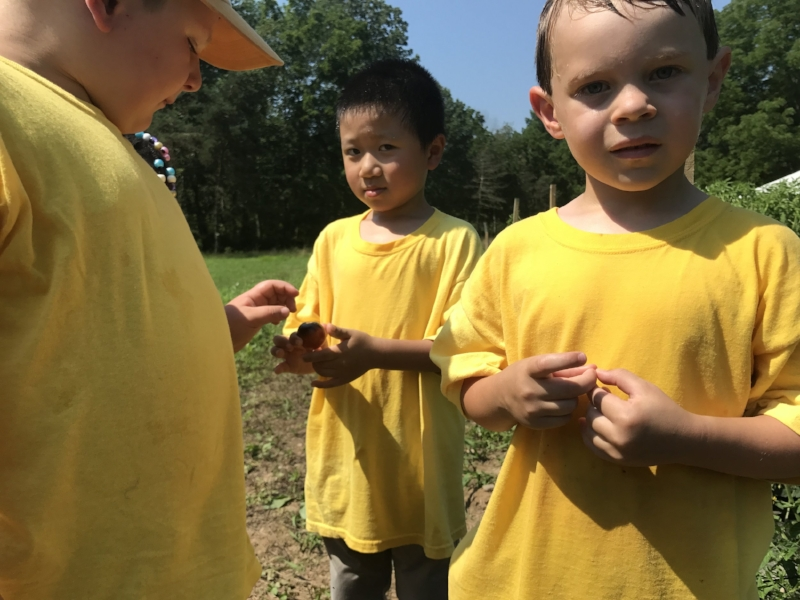 Preschoolers curiously inspect an orange and purple tomato on a farm tour.
