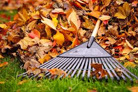 Fall Clean Up by LEAF Crew  -