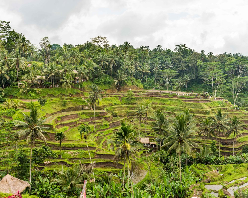 Ubud Ricefields-1.jpg