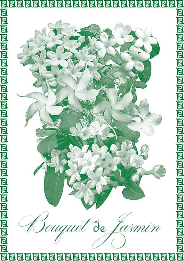 Jasmine Blossom Feminine. Jasmine Blossom celebrates its namesake, Jasmin, arguably the greatest perfume ingredient of all time. My formula contains four different varieties of this incredibly fragrant flower, including two precious extraits. I use small amounts of other ingredients to support an indulgent and narcotic experience.
