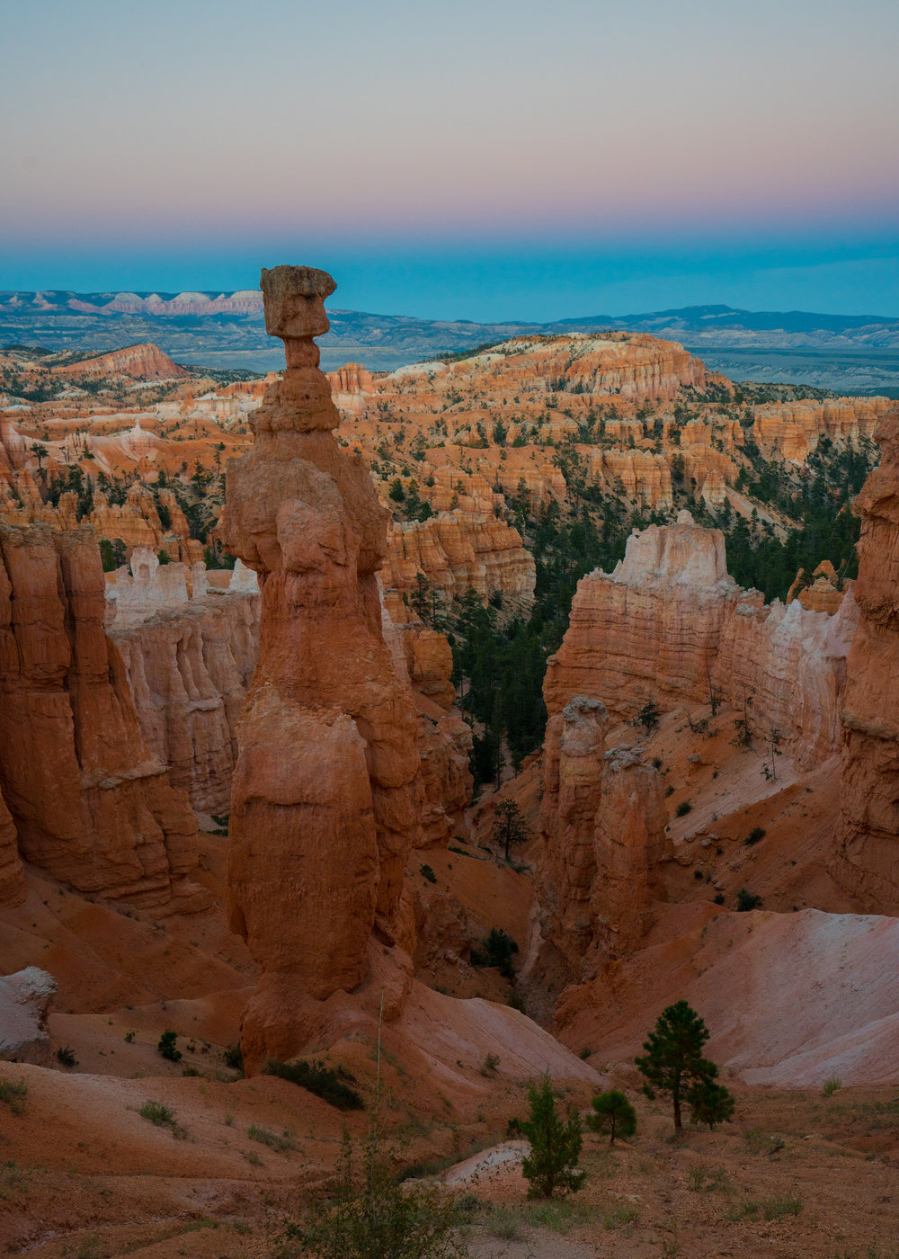 Thor's Hammer in Bryce Canyon National Park. Mature Ponderosa pine at bottom right for size reference. Earth's shadow visible in the fading sunlight.