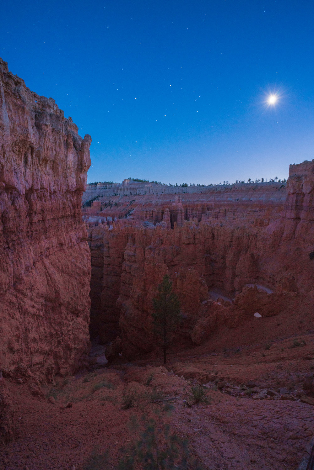 The canyon fins of Wall Street illuminated by the moon. It proved impossible to get a sharp image because the wind was whipping up through the canyon walls and shaking my tripod during the 30-second exposures.